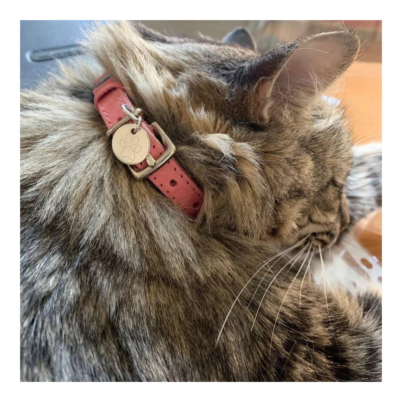925 silver grey leather cat collar & medal